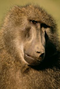 a monkey's face